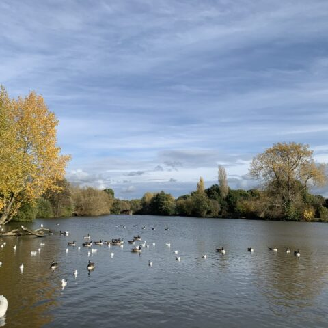 Earlswood Lower Lake