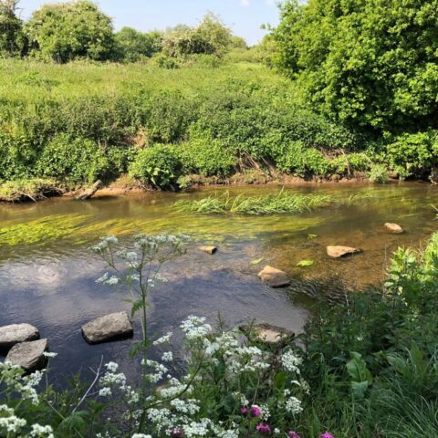 River Mole – Church Meadows to Court Lodge Playing Fields